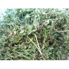 Лапчатка прямостоячая ( калган ) трава