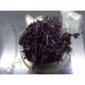 Иван-чай цвет