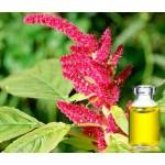 Амарантовое масло - польза для здоровья, сквален и многое другое
