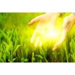 Адаптогены  - природные энергетики для улучшения качества жизни