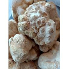 Ежовик гребенчатый гриб