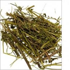Астрагал перепончатый трава