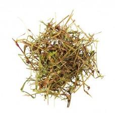 Горец перечный трава