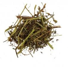 Клевер луговой трава