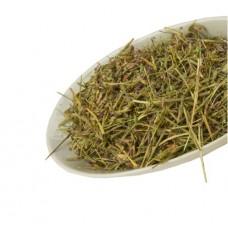 Клевер люпиновый трава