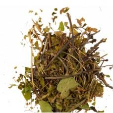Княжик сибирский трава