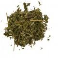Лабазник вязолистный трава