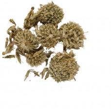 Мордовник обыкновенный (семена)