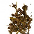 Пустырник (трава)