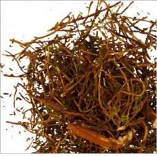 Шикша (трава)