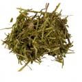 Соссюрея иволистная (трава)
