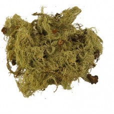 Уснея (трава)