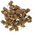 Василек луговой цветки