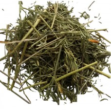 Вздутоплодник сибирский трава