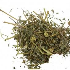 Якорцы стелющиеся (трава)