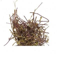 Зизифора трава