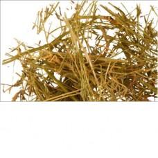 Золототысячник трава