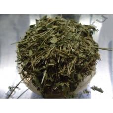 Барвинок трава
