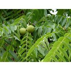 Чёрный орех лист