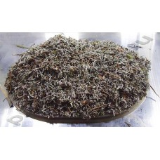 Кладония (олений мох, ягель, исландский мох, cladonia rangiferina Hoffm)